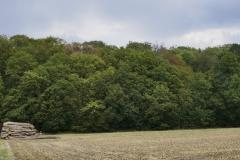 Waldschäden_Dürre_2018_2019_Teuto_Tecklenburg_Buche_150Jahre_Naturschutz_Verkehrssicherung_02