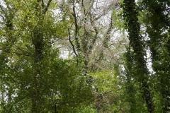 Waldschäden_Dürre_2018_2019_Teuto_Tecklenburg_Buche_150Jahre_Naturschutz_Verkehrssicherung_23