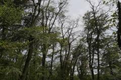 Waldschäden_Dürre_2018_2019_Teuto_Tecklenburg_Buche_150Jahre_Naturschutz_Verkehrssicherung_43