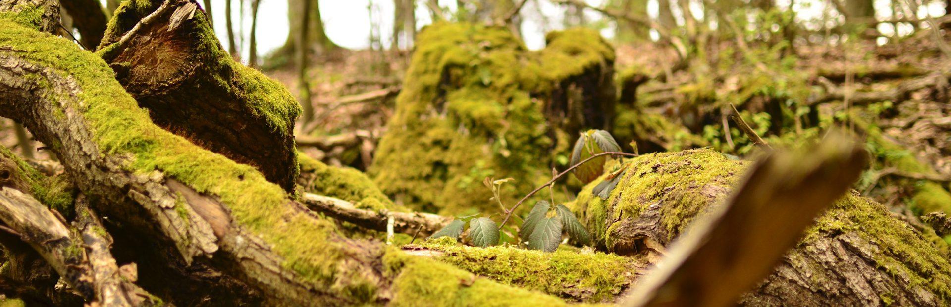 Landesvertretung IG BAU Forst und Naturschutz